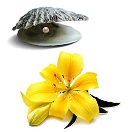 masaze bruno lomi lomi havajska masaza